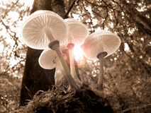 Free Mushroom, Fungus, Edible Mushroom, Tree Royalty Free Stock Photo - 89872045
