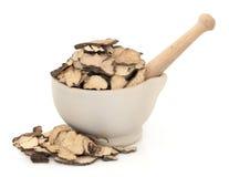 Mushroom Fungus Herb Royalty Free Stock Photos