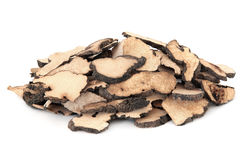 Mushroom Fungus Stock Photo