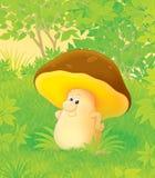 Mushroom Royalty Free Stock Image