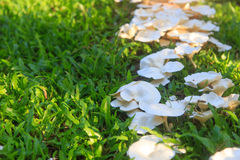 Mushroom in garden Royalty Free Stock Images