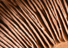 Mushroom gills royalty free stock images