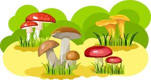 Mushroom glade Royalty Free Stock Photo