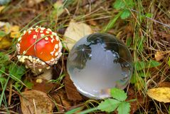 Mushroom and  Glass Globe Stock Photo
