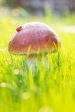 Mushroom in grass Stock Photos