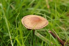 Mushroom and grass royalty free stock image