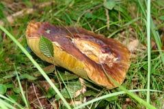 Mushroom in a grass Stock Image