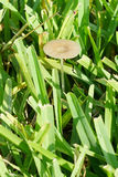 Mushroom in grass Stock Photos