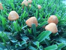 Mushroom and grass Stock Photos