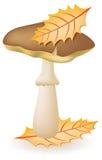 Mushroom greasers vector illustration Royalty Free Stock Image
