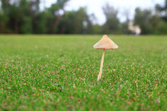 Mushroom on green field Royalty Free Stock Photography