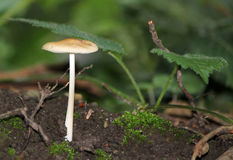 Mushroom on the ground in the forest Stock Photography
