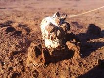 Mushroom. Ground spud growing royalty free stock photography