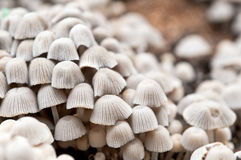 Mushroom group Royalty Free Stock Images