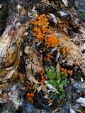Mushroom (4) Stock Photos