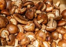 Mushroom group Royalty Free Stock Photos