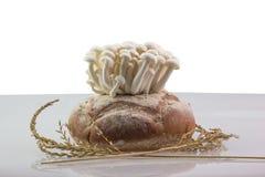 Mushroom grow up Stock Image
