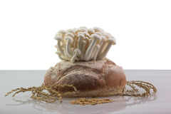 Mushroom grow up Royalty Free Stock Photos