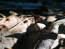 Mushroom growing from the deciduous heap Stock Image