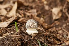 Mushroom growing in a forest stock photography