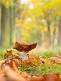 Mushroom growing in a Forest Tree Lane royalty free stock image
