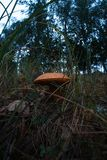 Mushroom growing on nature with blurred fisheye background. royalty free stock images