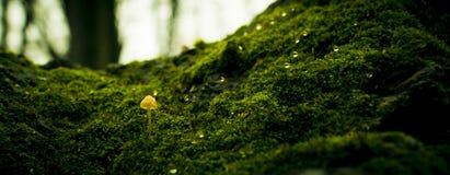 Mushroom. A mushroom grown on moss tree on autumn rain Royalty Free Stock Photo