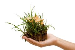 Mushroom in hand. Grass and mushrooms in a handful of soil held by a woman Stock Photos