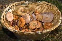 Mushroom harvest Stock Image