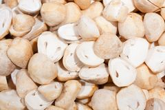 Mushroom hemispherical part Royalty Free Stock Photography