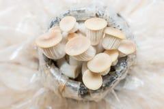 Mushroom house Royalty Free Stock Image