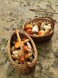 Mushroom hunt Royalty Free Stock Photos