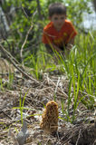 Morel Mushroom hunting Stock Photos