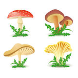 Mushroom icons Royalty Free Stock Photography
