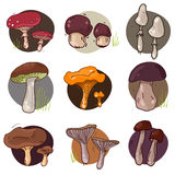 Mushroom icons set Royalty Free Stock Images