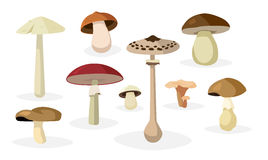 Mushroom illustrations set Royalty Free Stock Photography