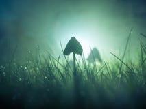 Free Mushroom In A Foggy Night Stock Photography - 129572762