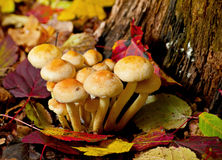 Free Mushroom In Forest Stock Image - 29607081