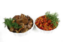 Mushroom inside white bowls Royalty Free Stock Images