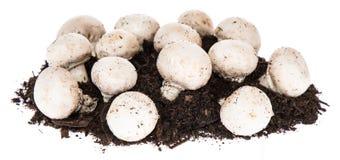 Mushroom Island Royalty Free Stock Photos
