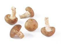 Mushroom isolated Stock Photography