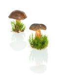 Mushroom isolated on white background Stock Image