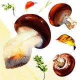 Mushroom isolated on white background. Champignon, porcini mushrooms. watercolor painting on white background Royalty Free Stock Images