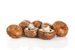 Mushroom  isolated on white background. vegetable food Stock Image