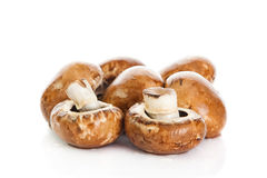 Mushroom  isolated on white background. vegetable food Stock Photos