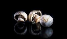 Mushroom. Juicy and fresh mushroom creativity Royalty Free Stock Photo