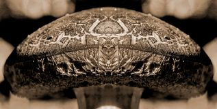 The Mushroom King. Was created when I mirror imaged a photo of a red-cracking bolete mushroom royalty free stock image