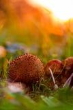 Mushroom Kingdom Royalty Free Stock Image