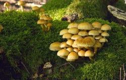 Mushroom Kingdom . Stock Image