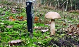 Mushroom and knife Stock Photos